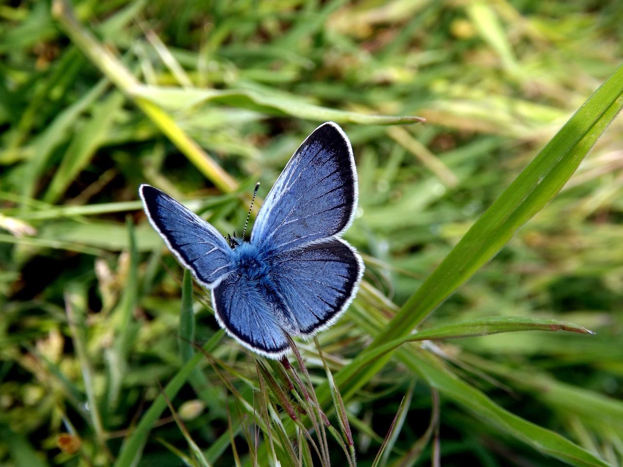 butterfly-759692_1280
